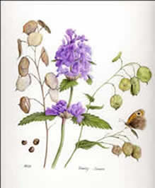 Intro to Botanical Art with Marion Wilson, Quirky Workshops at Greystoke Cycle Cafe
