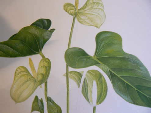 A Botanical Watercolour and Gouache original by SImon Williams SBA