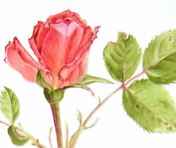 BotanicalIllustration (or wildlife) with SImon Williams March 10, 11th and /or 12th